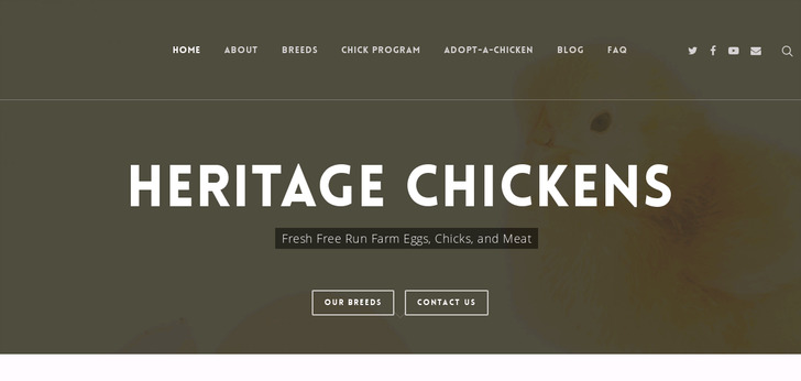 Heritage Chickens Fresh Farm Eggs