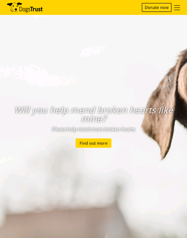 Dogs Trust  Web Design