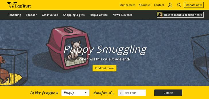 Best Pet Website Design